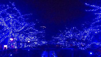 画像)【イルミネーション情報有】新宿御苑の紅葉と目黒川の「青の洞窟」を観に行ってきたよ