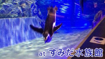 画像)ペンギン好きには堪らない!すみだ水族館に行ってきた話